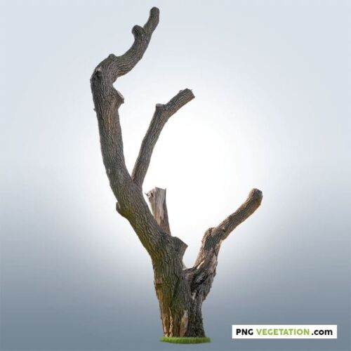 Cut out pruned tree
