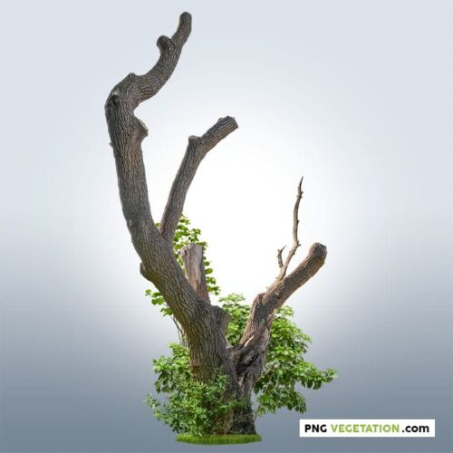 PNG pruned tree with green foliage