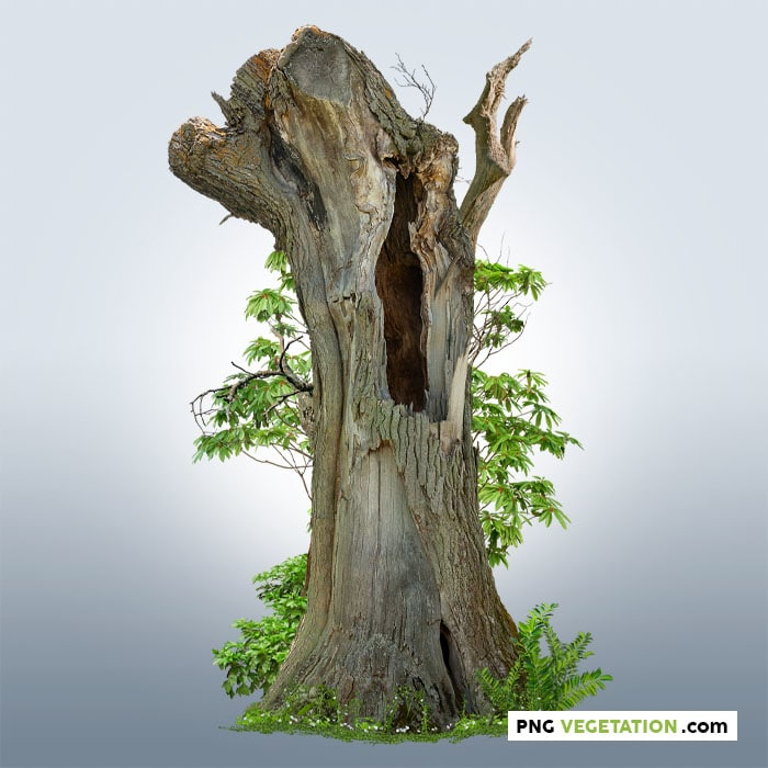Cut out hollow tree with green foliage
