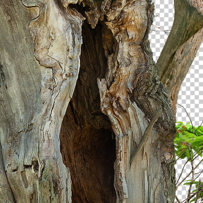 Detail of PNG hollow tree and foliage